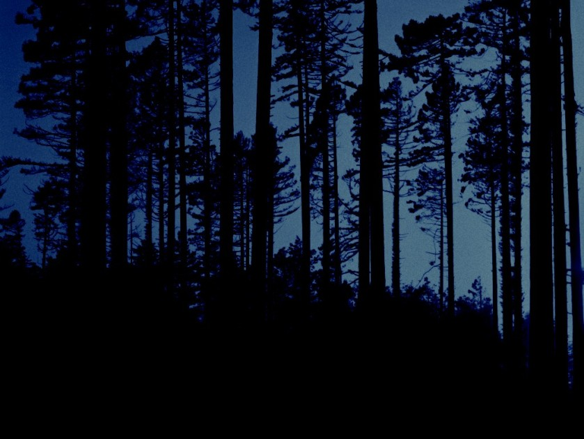 Bosque-Noche[1]